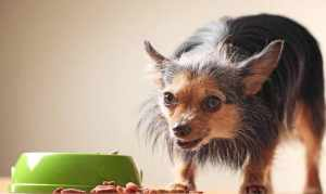 Review Of Pure Balance Dog Food